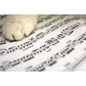 Les musiques zen de Rouky (à télécharger)
